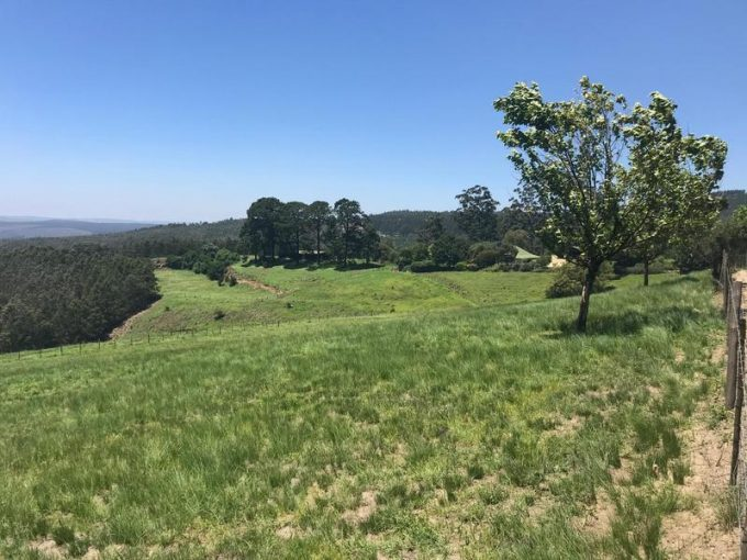 Farm For Sale in Greytown, Greytown
